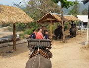Mar. 26, 2016 Riding Elephants 2 (5)